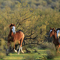 Running In The Desert by Sue Cullumber