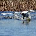 Running On Water by Debbie Oppermann