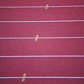Running Track by Frank Romeo