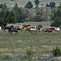 Running Wild Horses  by Out West Originals