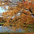 Rural Autumn Country Beauty by Deborah Benoit