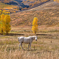 Rural Colorado  by Shane Mossman