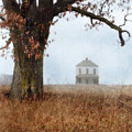 Rural Farmhouse And Large Tree by Jill Battaglia