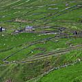 Rural Landscape On Dingle Peninsula by Gabriela Insuratelu