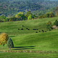 Rural Life by Eleanor Bortnick