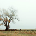 Rural Pasture And Tree by Todd Klassy