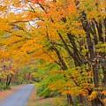 Rural Road by Anne Ditmars