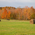 Rural Scene by Raju Alagawadi