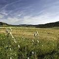 Rural Scenic Landscape by Zoltan Albertini