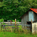 Rural Serenity - Red Roof Barn Rustic Country Rural by Jon Holiday