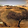 Rural Spain View by Mal Bray