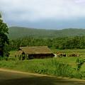 Rural Village by Sarath Dissanayake