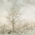 Rural Winter Landscape by Julie Palencia