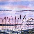 Rushes by Pat Vickers