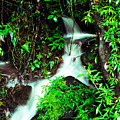 Rushing Stream El Yunque National Forest by Thomas R Fletcher