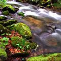 Rushing Stream Monongahela National Forest by Thomas R Fletcher