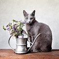 Russian Blue 02 by Nailia Schwarz