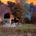 Rustic Barn In Disrepair False Color Infrared by Alan Look