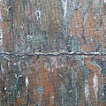 Rustic Barn Wood And Wire by Roy Penny