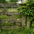 Rustic Gate by Robert Coffey