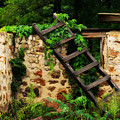 Rustic Ladder by Perry Webster