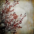 Rustic Moon by Patricia Strand