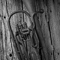 Rustic Old Horn by Garry Gay