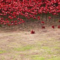 Rustic Poppy Garden by Joy of Life Art Gallery