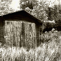 Rustic Shed by Perry Webster