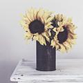 Rustic Sunflowers by Kim Hojnacki