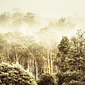 Rustic Tasmanian Rural Forest by Jorgo Photography - Wall Art Gallery