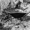 Rusting Wheelbarrow, Bodie Ghost Town by Gene Parks