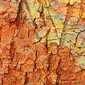 Rusty Bark Abstract by Carol Groenen