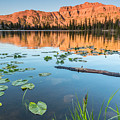 Ruth Lake Lilies by Gina Herbert
