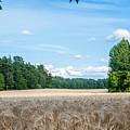 Rye by Torbjorn Swenelius