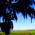 Sabine National Wildlife Refuge Along The Creole Nature Trail by Thomas R Fletcher