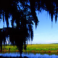 Sabine National Wildlife Refuge by Thomas R Fletcher