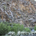 Sabino Canyon Cliff Of Cacti by Jemmy Archer
