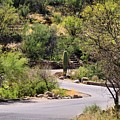 Sabino Canyon Road by Kathryn Meyer