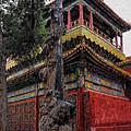 Sacred Millennium Tree Trunk by Syed Muhammad Munir ul Haq