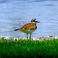 Sad Bird Near Pond by Lilia D
