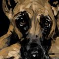 Sad Dog by Lori Wadleigh