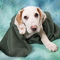 Sad Dog On Pastels by Angel McCoy