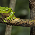 Sad Green by LOsorio Photography