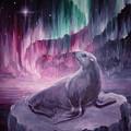 Sad Lonely Seal by Chirila Corina