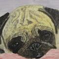 Snugly  Pug by Tom Wheeler
