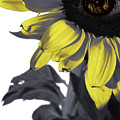 Sad Sunflower by Kelly Jade King