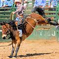 Saddlebronc 101 by Cheryl Poland
