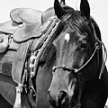 Saddled To Go by Joanne Riske