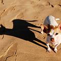 Sadie And Her Shadow by Kristin Yata
